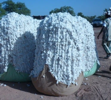 Décisions de l'Association Interprofessionnelle du Coton du Burkina : l'UNPCB en informe ses membres